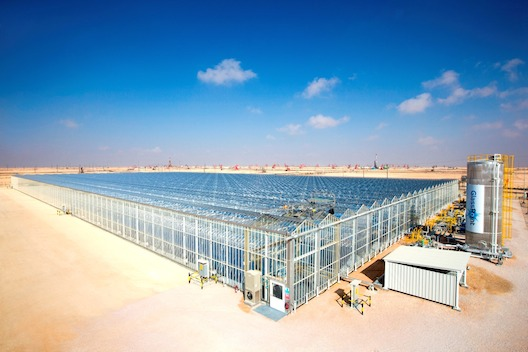 The Amal Solar EOR Pilot Project